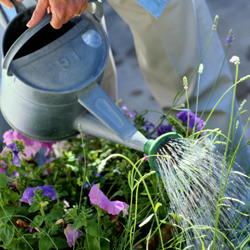 watering_1