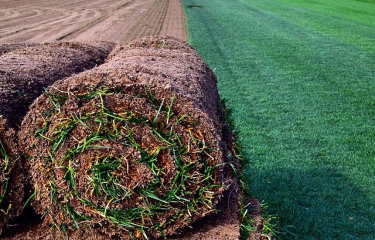 We Purchase From A Local Sod Farmer To Ensure It Is Fresh Cut And Healthy Because S Perishable Product Must Be Laid Out The Day Delivered